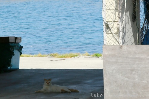 漁港での再会_b0153363_2191961.jpg
