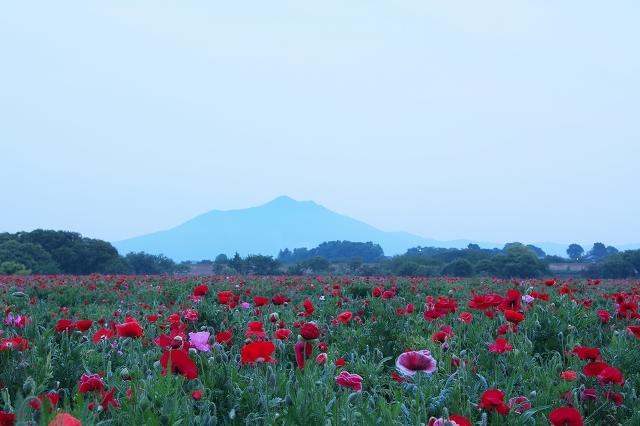 小貝川ふれあい公園 1_f0018464_11474720.jpg
