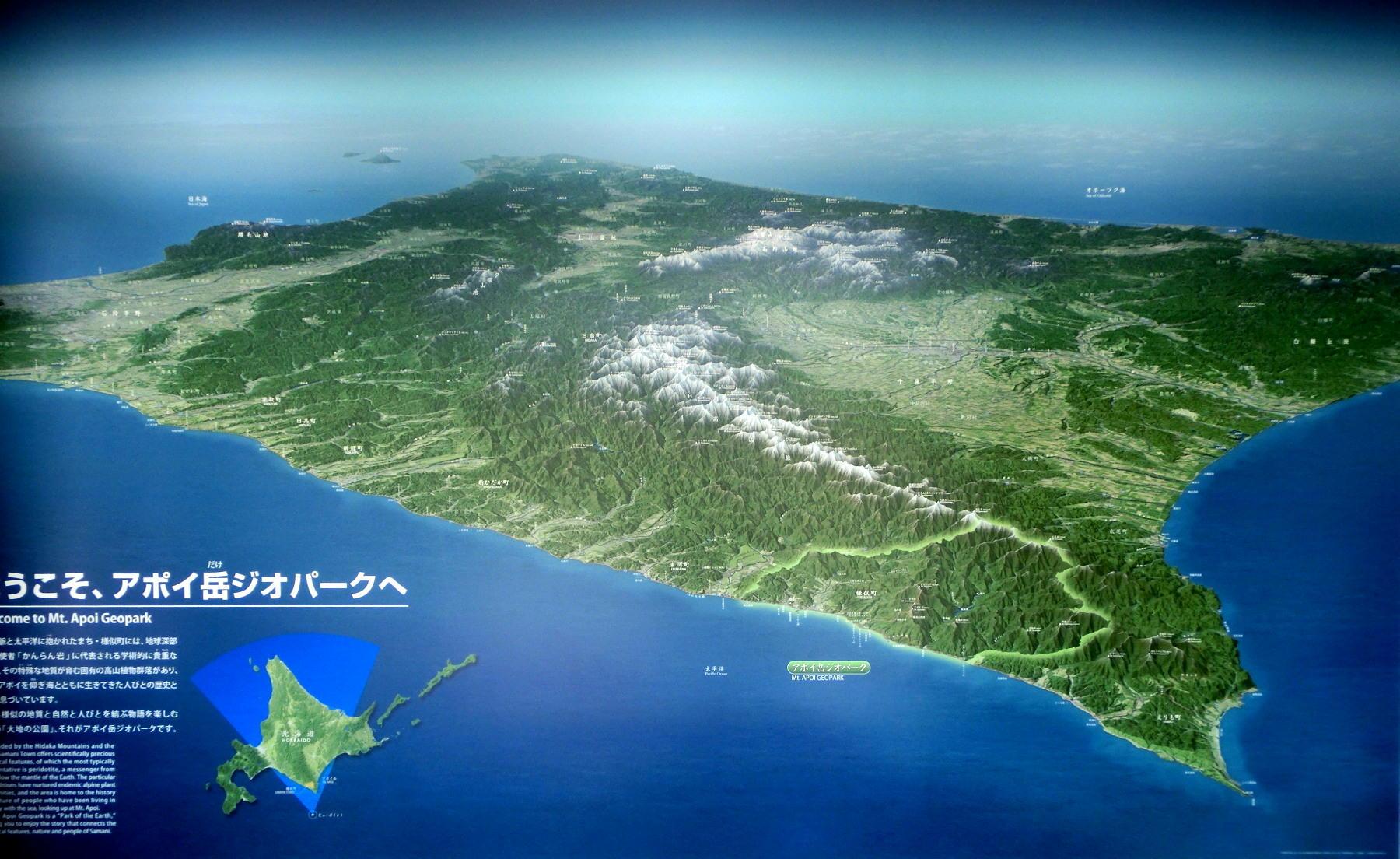 シノリガモ  アポイ岳の高山植物に逢う前に。 2014.5.25北海道04_a0146869_6235677.jpg