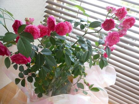 バラが咲いた!!_b0186183_10274913.jpg
