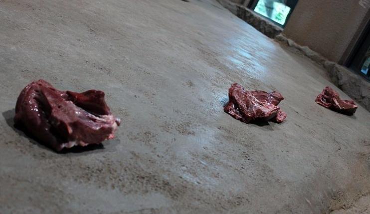 肉食動物デー_c0155902_21344891.jpg
