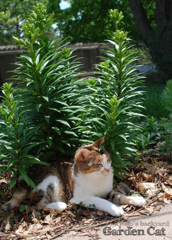 花壇でくつろぐ猫_b0253205_216561.jpg