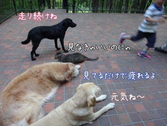 f0064906_1684947.jpg