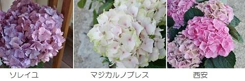 c0247614_17554278.jpg