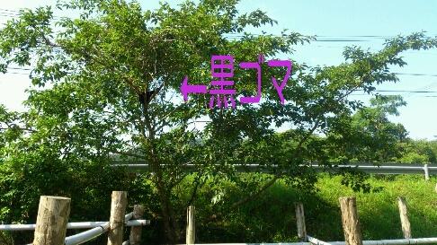 b0187620_2123367.jpg