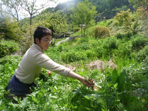 【 満月の 春の 野草酵素づくり 】_e0015223_22514678.jpg
