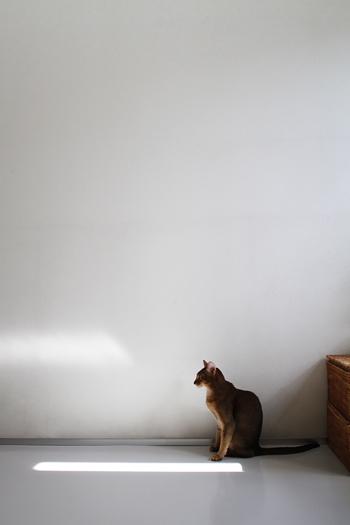 [猫的]夏支度_e0090124_2353016.jpg