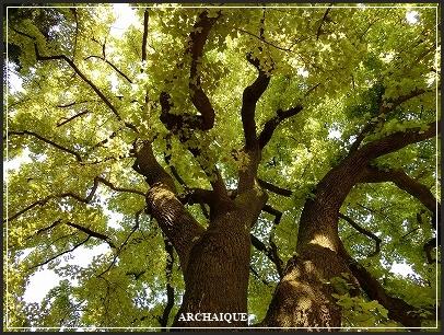 **緑の風**_c0207890_16451844.jpg
