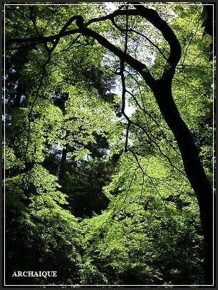 **緑の風**_c0207890_16453264.jpg