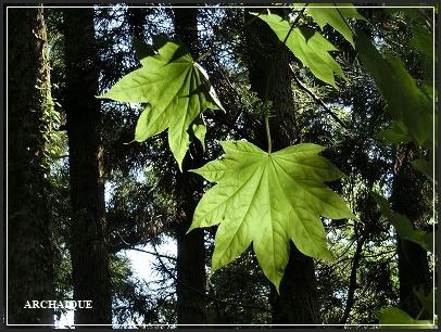 **緑の風**_c0207890_16454759.jpg