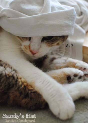 Sandyの帽子_b0253205_313423.jpg