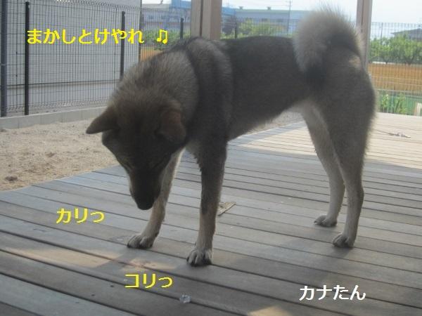 f0143123_20355227.jpg