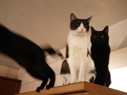 スタート地点猫 ぎゃぉすてぃぁらみるきぃ編。_a0143140_22565477.jpg