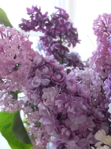 札幌の木・ライラックがいい香り!_d0246960_21172510.jpg