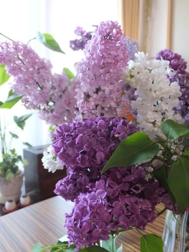 札幌の木・ライラックがいい香り!_d0246960_21175144.jpg