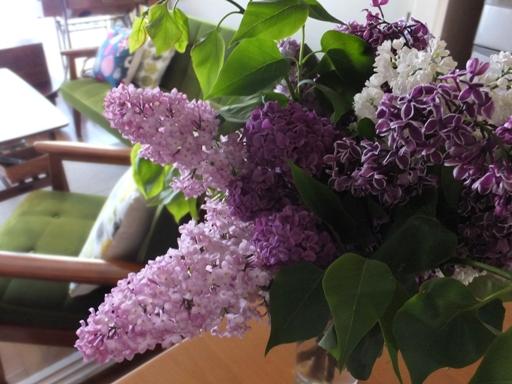 札幌の木・ライラックがいい香り!_d0246960_211762.jpg