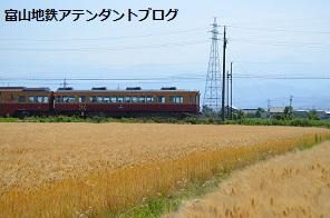 地鉄沿線を撮ってみました!黄金の景色編_a0243562_15035397.jpg