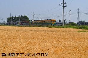 地鉄沿線を撮ってみました!黄金の景色編_a0243562_15052400.jpg