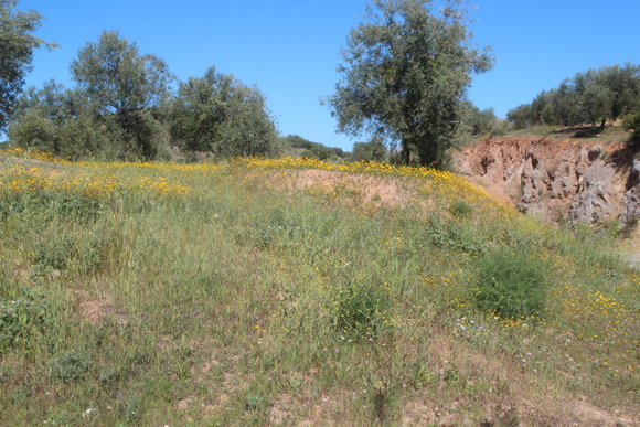 SKY140602 黄色い花の咲く丘に思わず足を止める_d0288367_16121133.jpg