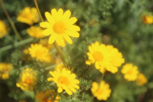 SKY140602 黄色い花の咲く丘に思わず足を止める_d0288367_16124029.jpg