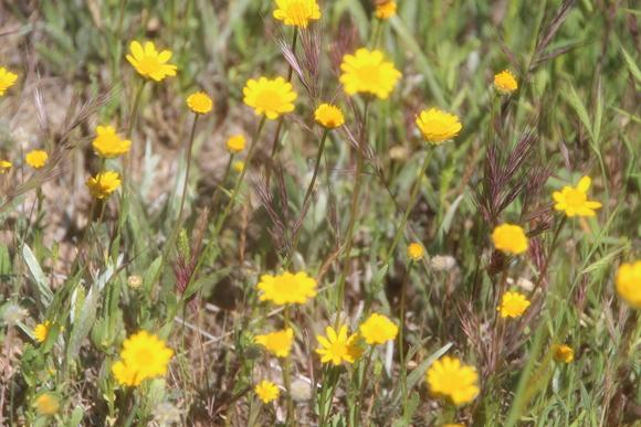 SKY140602 黄色い花の咲く丘に思わず足を止める_d0288367_16131417.jpg