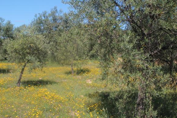SKY140602 黄色い花の咲く丘に思わず足を止める_d0288367_16133893.jpg