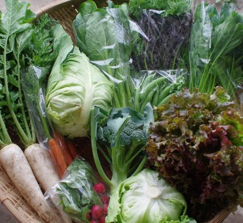 今週の野菜セット(6/3~6/7着)_c0110869_14141158.jpg