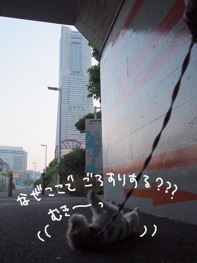 b0092580_110392.jpg