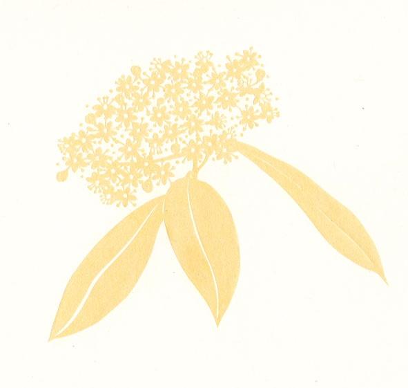 6月の白い花_f0311281_1556230.jpg
