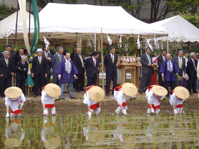 諏訪大社・御田植祭_b0329588_17044386.jpg