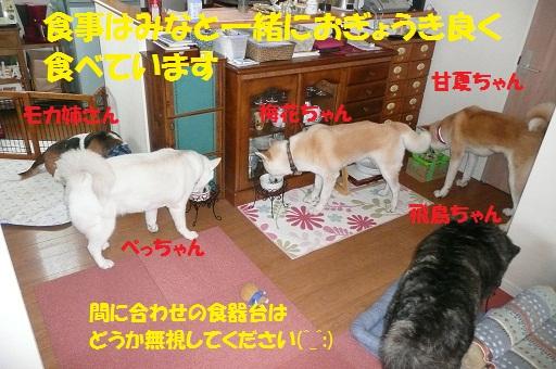 f0121712_7582323.jpg