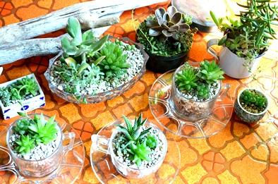 涼しげな多肉植物と食虫植物_d0263815_13345910.jpg