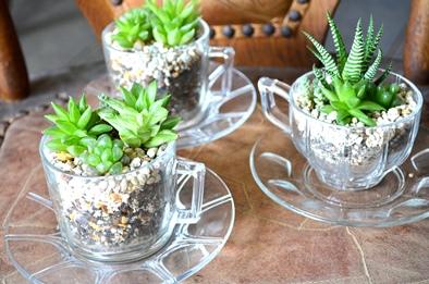 涼しげな多肉植物と食虫植物_d0263815_13382844.jpg
