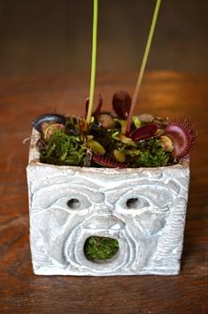 涼しげな多肉植物と食虫植物_d0263815_14161694.jpg