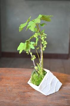 涼しげな多肉植物と食虫植物_d0263815_14453219.jpg