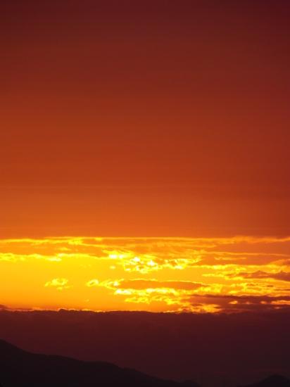 早朝の「緑の世界」_a0125419_06025756.jpg