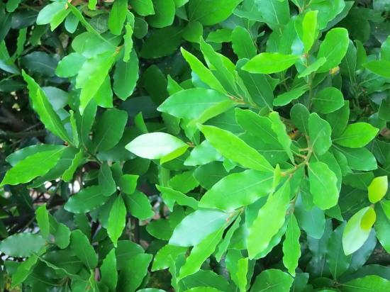 早朝の「緑の世界」_a0125419_06174279.jpg