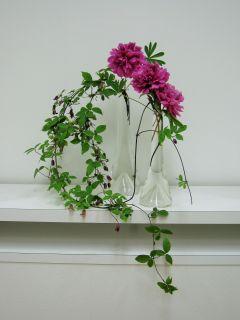 ✿すべて庭花✿_c0165824_2247497.jpg