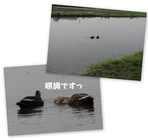 d0033336_14030557.jpg