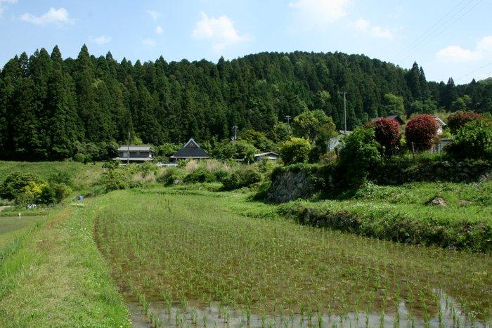 季節が感じられる場所~長谷の棚田_b0168840_23115139.jpg