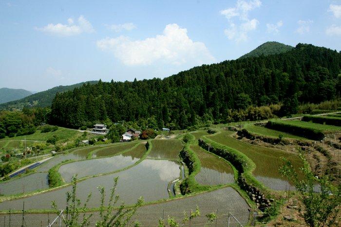 季節が感じられる場所~長谷の棚田_b0168840_23162501.jpg