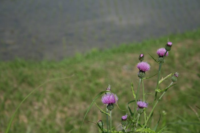 季節が感じられる場所~長谷の棚田_b0168840_23193040.jpg