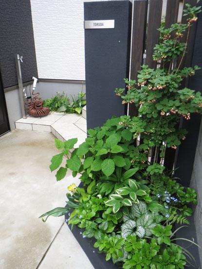 Tさま邸の植物チェックぅ_f0141971_2584115.jpg