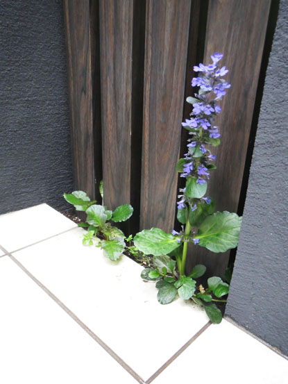 Tさま邸の植物チェックぅ_f0141971_2592167.jpg