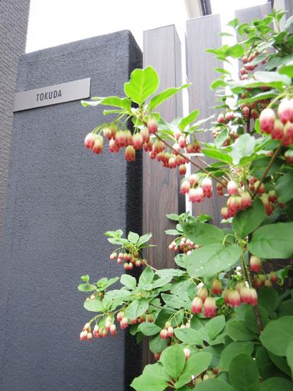 Tさま邸の植物チェックぅ_f0141971_259456.jpg