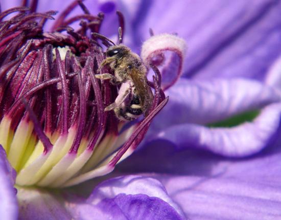 種から育ったクレマチスの開花♪_a0136293_1234569.jpg