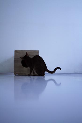 [猫的]桐_e0090124_1164352.jpg