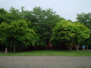 緑に囲まれたトランポリン_b0174425_1832165.jpg