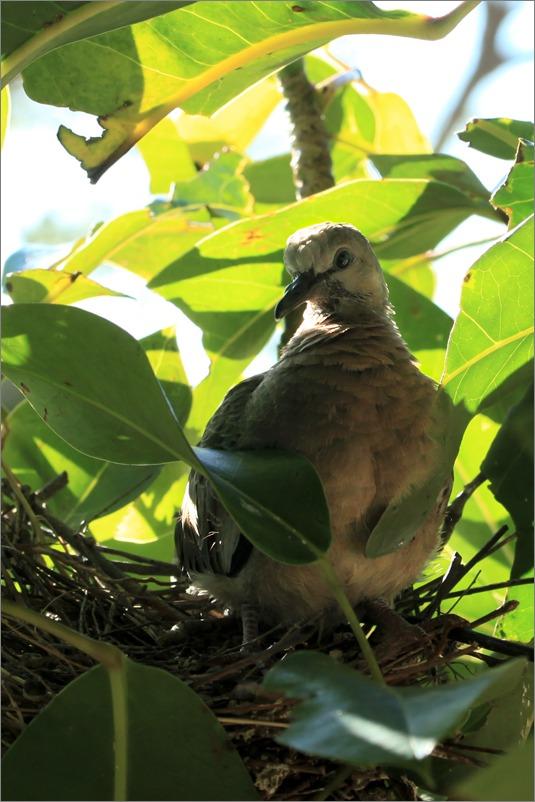 鳩の子育て、巣立ちの時 / 2014.6.4_e0155629_21384355.jpg