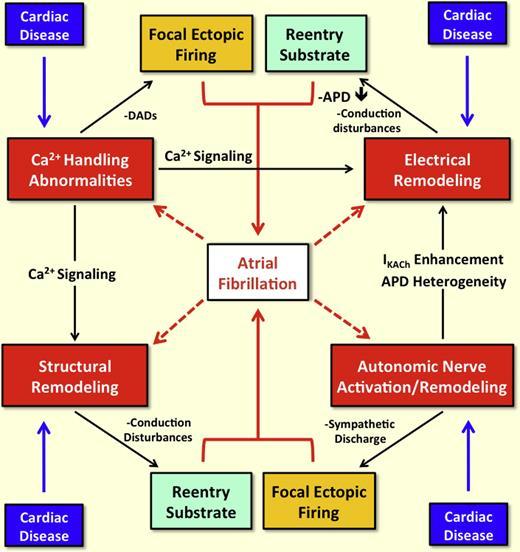 心房リモデリングに関する総説:JACC誌_a0119856_11205523.jpg